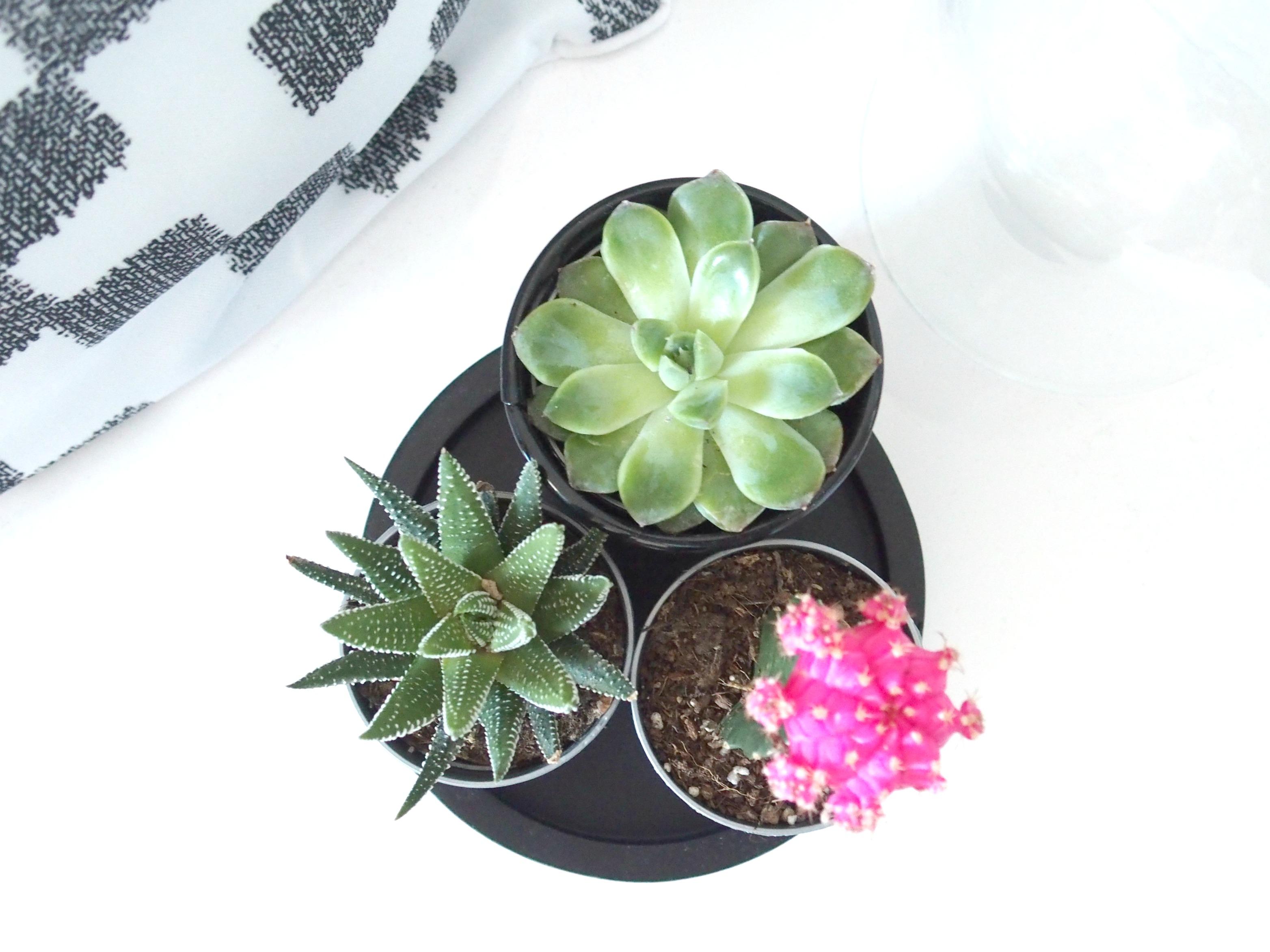 Cactus et Succulentes - ChestnutsandPeonies