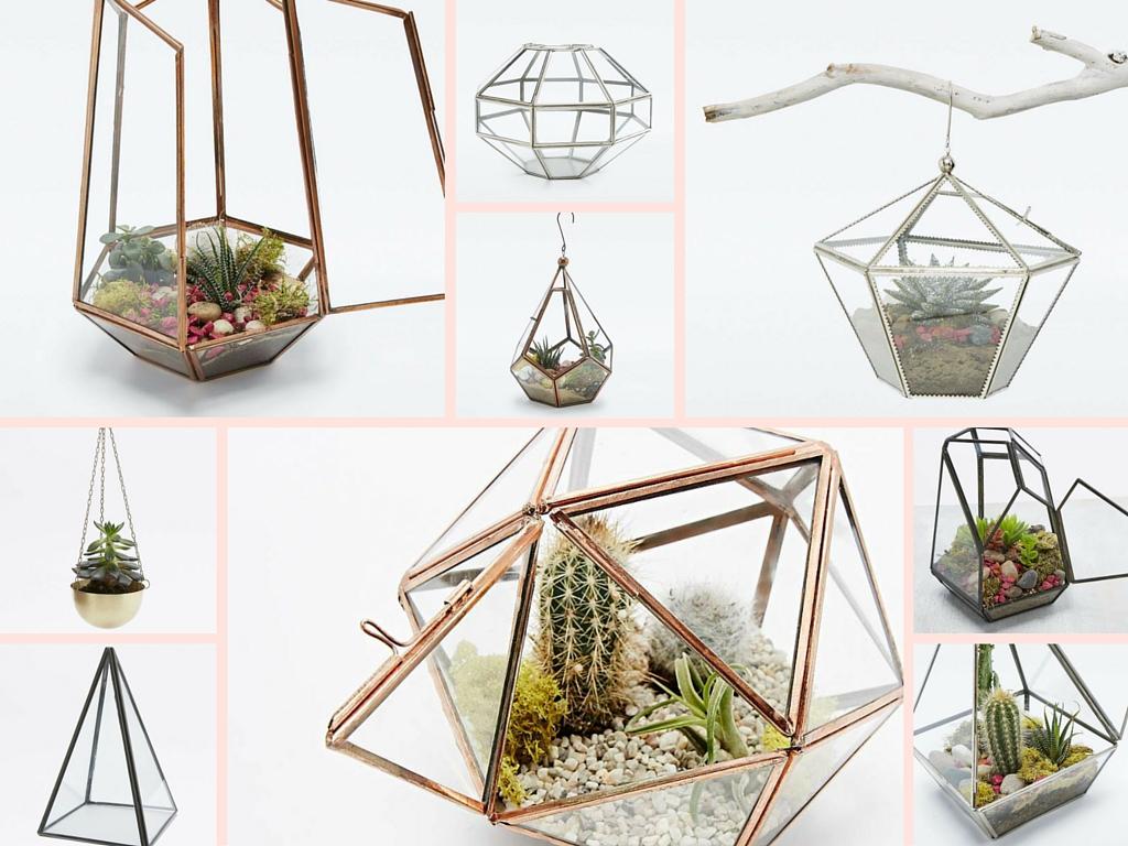 Succulentes Cactus Terrariums - Urban Outfitters